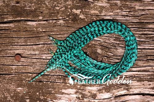 Grizzly dyed Teal Hair Feathers